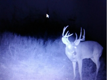 Deer Lease for Sell 120 acres